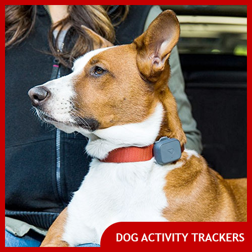 Best Dog Activity Trackers