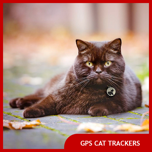 Best Cat Trackers with GPS and Bluetooth